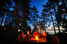 Friends In Forest Near Bonfire...