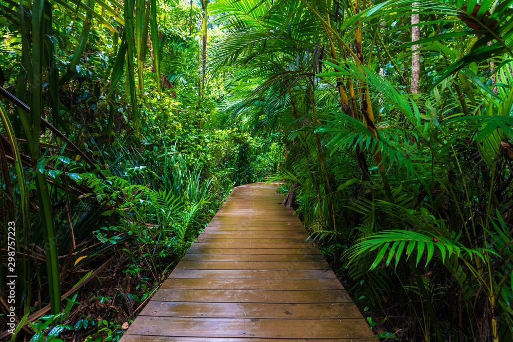 Fototapeta Wooden pathway in deep green mangrove forest