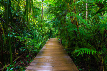Panel Szklany Podświetlane Las Wooden pathway in deep green mangrove forest