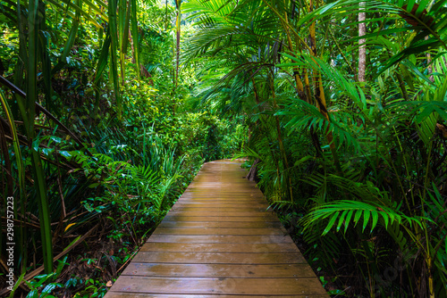 Autocollant pour porte Arbre Wooden pathway in deep green mangrove forest