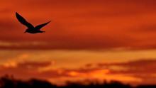 Hawks & Birds In Prince Edward.