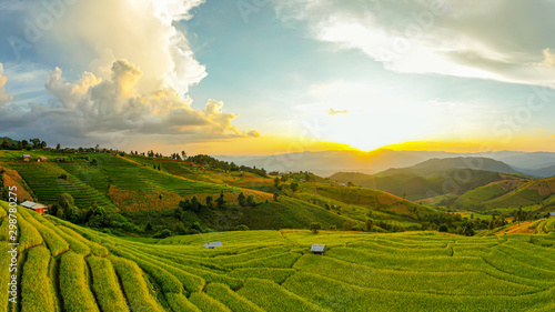 Aluminium Prints Rice fields default