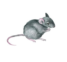 Mouse Symbol Of The Year 2020, Watercolor Illustration, Hand-drawn. Isolated Image On A White Background. For Your Projects, Invitations, Cards, Patterns, Posters And More.