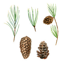 Fir And Pine Branches With Con...
