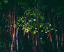 Tropical Nature Environment Wi...