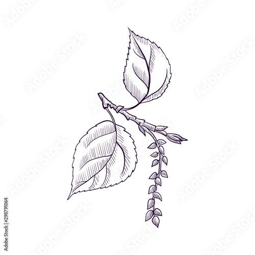 vector drawing branch of black poplar tree Tapéta, Fotótapéta
