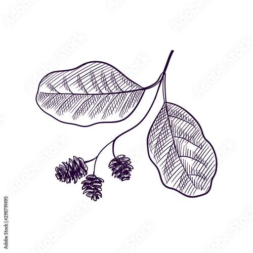 vector drawing branch of alder tree Canvas Print