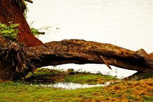 The Fallen Trees In Water With...