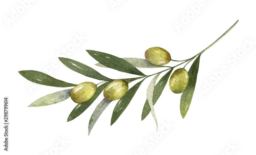 Fototapeta Watercolor vector olive branch with leaves and fruits. obraz