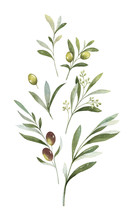 Watercolor Vector Bouquet Of Olive Branches And Flowers.