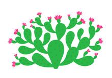 Opuntia Cactus Plant. Prickly ...