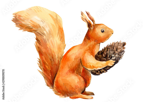Photographie squirrel on an isolated white background, watercolor illustration