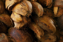 Heaps Of Coconut Coir Husk Pat...