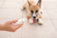 Dog Grinding Toenails In Hand