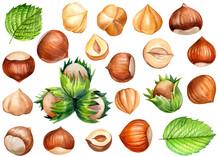 Watercolor Hazelnut, Set Of Dr...