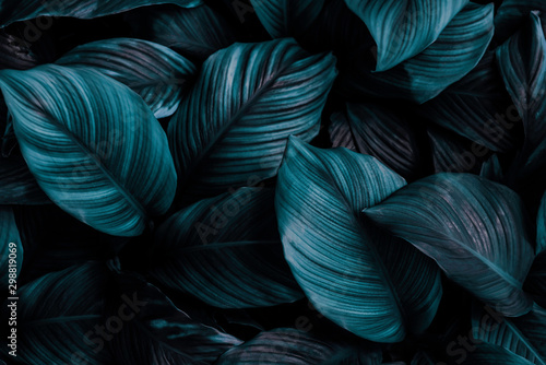 Poster de jardin Hortensia The concept of leaves of Cannifolium spathiphyllum, abstract dark green surface, natural background, tropical leaves