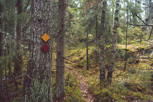 Trail Marks In The Forest