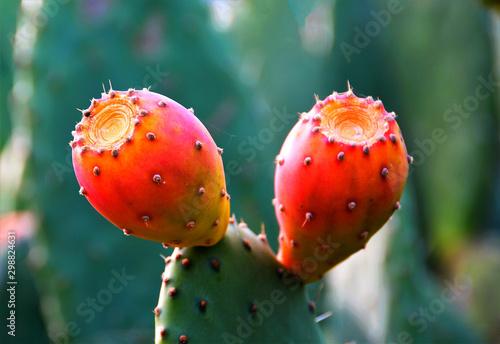 cactus fruit on a leaf - 298824631