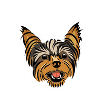 Yorkshire Terrier - Isolated V...