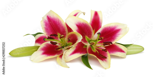 Stampa su Tela  Two red lily flowers isolated on white