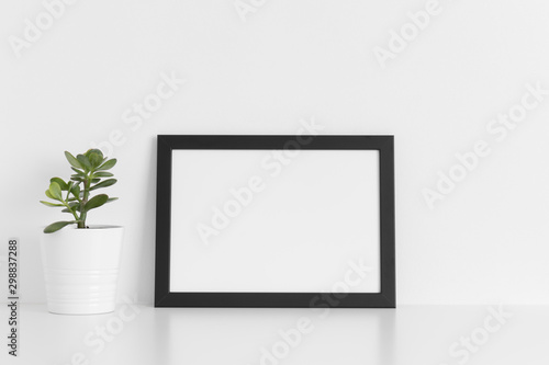 Fototapety, obrazy: Black frame mockup with a crassula plant in a pot on a white table.Landscape orientation.