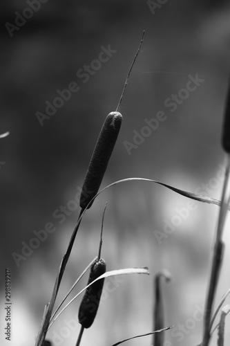 Photo Nature