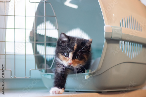 The cat sits in a carrier for animals Wallpaper Mural