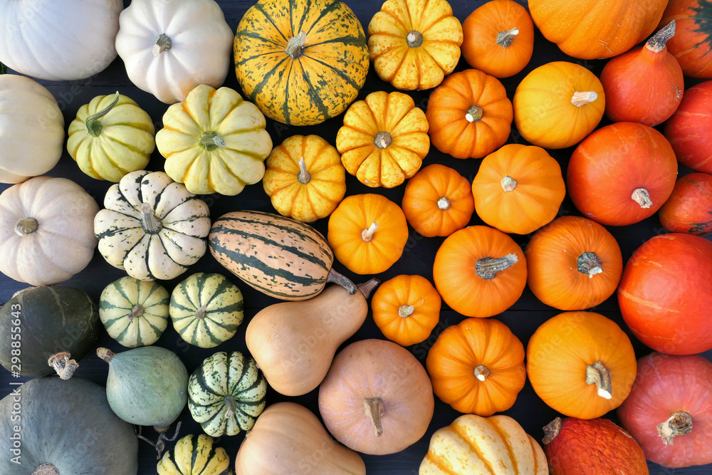 Fototapeta Colorful pumpkins and squashes collection. Autumn background.