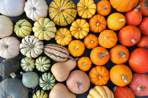 Colorful pumpkins and squashes collection. Autumn background. Wallpaper Mural