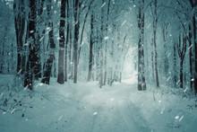 Snowy Road In Winter Forest Du...