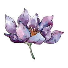 Lotus Floral Botanical Flowers...
