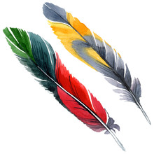 Colorful Bird Feather From Win...
