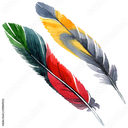 Photo  Colorful bird feather from wing isolated