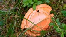 The Orange Cap Of The Plastic ...