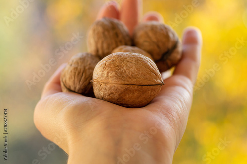 Walnuts in a female hand Canvas-taulu