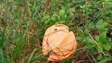 View Of The Orange Cap Of The ...