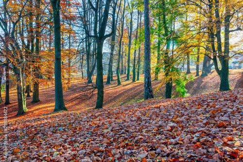 Keuken foto achterwand Rood traf. Romantic fall colored park with trees and morning sunlight. Autumn season natural background. Fall concept in park. Vivid colorful natural scene. Europe