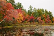 Fall Foliage 2019 #6