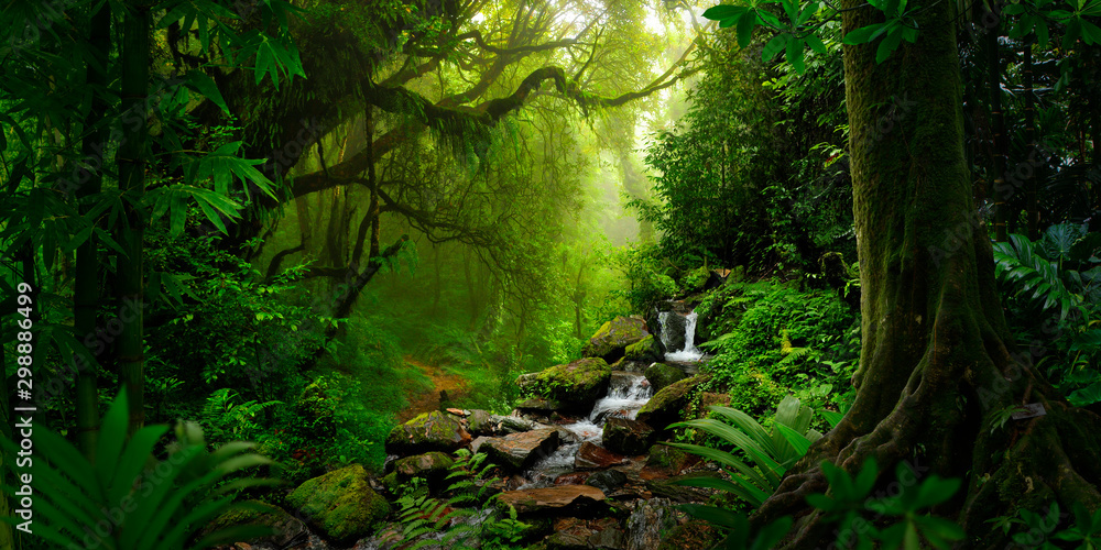 Fototapety, obrazy: Southeast Asian rainforest with deep jungle