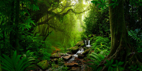 Southeast Asian rainforest with deep jungle
