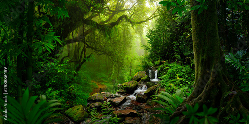 Poster Bamboe Southeast Asian rainforest with deep jungle