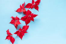 Christmas Flower Composition. Closeup Of Red Poinsettia Flowers (Euphorbia Pulcherrima) On Pastel Blue Background. Flat Lay, Top View, Copy Space
