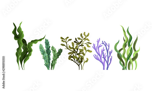 Obraz na plátně Set of green algae. Vector illustration on a white background.