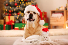Adorable Dog And Cat Wearing S...