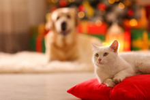 Cute White Cat On Pillow In Room Decorated For Christmas And Blurred Dog On Background. Adorable Pets