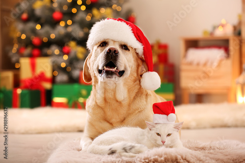 Adorable dog and cat wearing Santa hats together at room decorated for Christmas Obraz na płótnie