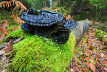 Log With Green Moss And A Blac...