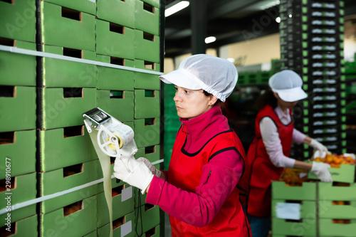 Fototapeta Nice workwoman sticking labels on carton boxes