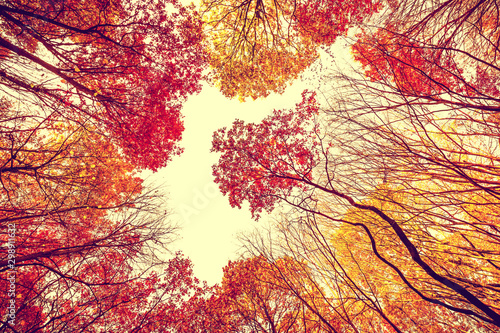 Autumn forest bottom view - colorful leaves, branches in autumn, october