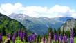 Blick auf die Alpen in Vorarlberg in Tirol, Österreich, hohe Berge mit blauem Himmel und Wolken, im Vordergrund blühen blaue Lupinen